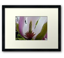 purple magnolia flower macro photography Framed Print