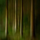 Swedish Forest by Ryan Carter