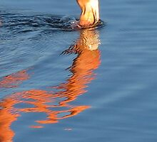 Flamingo 6. by Anne Scantlebury