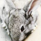 Bunny Rabbit by Ryan Carter