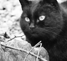"""""""Head-Bent"""" Pussy Rue (hidden behind a stone !), And I in birds tuned! but not in the same place for I  2 h) by Olao-Olavia / Okaio Créations  by fz 1000 2014 by Okaio - caillaud olivier"""