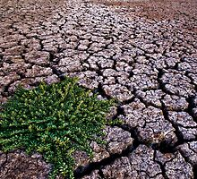 Drought by Ryan Carter