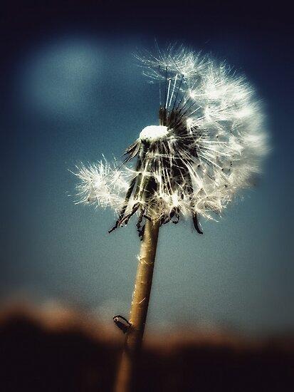 dandelion moon by © Karin  Taylor