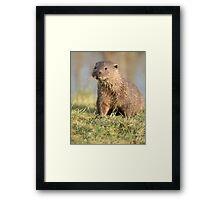 European Otter Framed Print