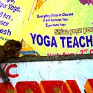 Yoga teacher in India-he's a monkey! No.1 by wehavegrown