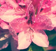 drops in a flower by fontina