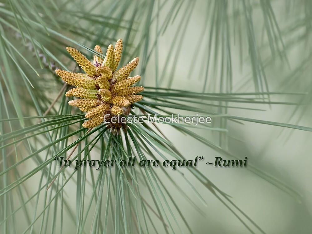 Aleppo pine - a prayer by Celeste Mookherjee