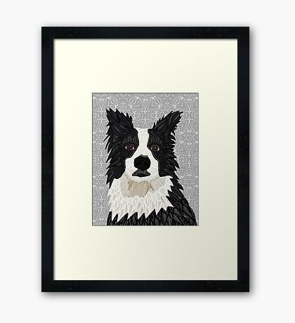 Beautiful Border Collie Framed Print