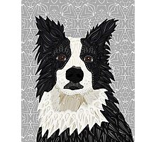 Beautiful Border Collie Photographic Print