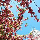 Cherry Blossom and Philadelphia City Hall in Spring 2010 by kiya69