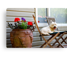 A dogs life is hard work Canvas Print