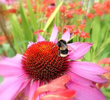 Busy Bee by Lewis Kesterton Photography