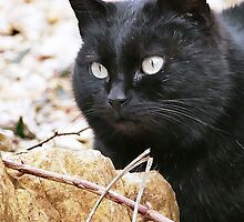 """""""Head-Bent"""" Pussy Rue (hidden behind a stone !), And I in birds tuned! but not in the same place for I  3 h) by Olao-Olavia / Okaio Créations  by fz 1000 2014 by Okaio - caillaud olivier"""