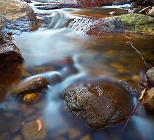 New Town Rivulet #18, Tasmania by Chris Cobern