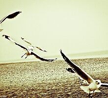 The Wings.  Made A Sale - 993887; Got Permanent Featured Page, Featured Work by Kornrawiee