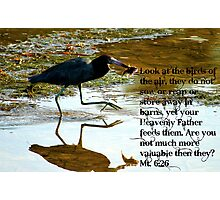 God supplies food even for the birds! Photographic Print