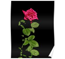 Black With A Hint Of Botanical Element ~ Part Nine Poster