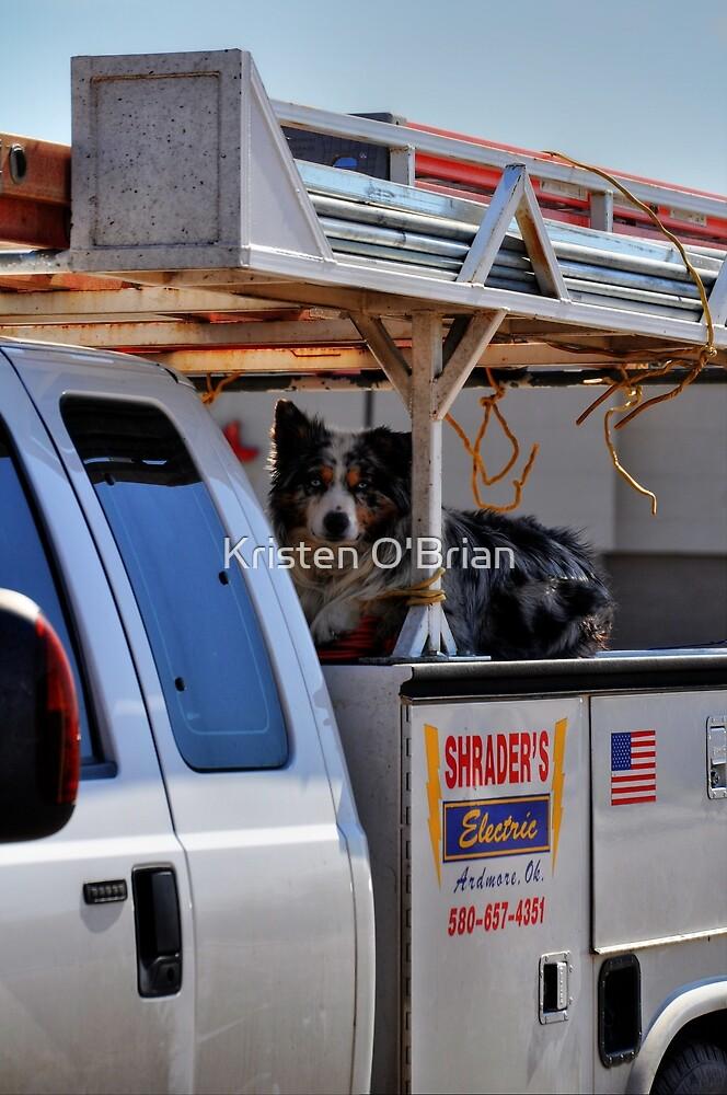 Working Dog by Kristen O'Brian