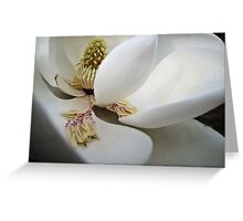 Delicate! Greeting Card