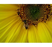 I Will Bee Your Shelter Photographic Print