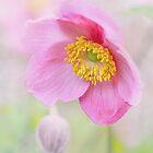 Japanese Anemone by OpalFire