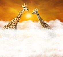 Rendezvous of two giraffes above the clouds by Geraldas Galinauskas