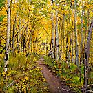 "Landscape Painting - Kenosha to Breckenridge Trail - 30"" x 30"" Oil by Daniel Fishback"