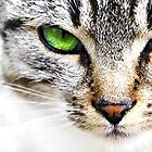 Green eye cat by Cristim