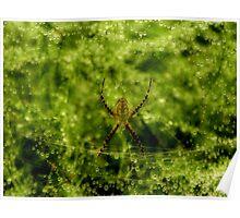 Arachne, the Garden Spider Poster
