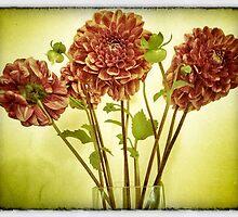 late summer dahlias by Anne  McGinn