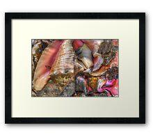 Conchs at the Fish Market in Montagu Beach, Nassau, The Bahamas Framed Print