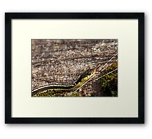 Forked Tongue Framed Print