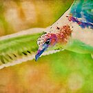 Rainbow Seagull by Deborah  Benoit