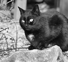 """Head-Bent"" Pussy Rue (hidden behind a stone !), And I in birds tuned! but not in the same place for I  3 h) by Olao-Olavia / Okaio Créations  by fz 1000 2014 by Okaio - Olivier Caillaud"