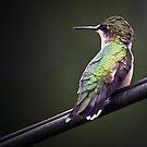 My first hummingbird by cherylc1