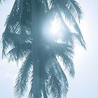 Palm in Sun by cyasick