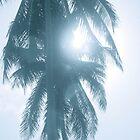Palm in Sun by cyasick