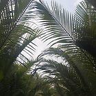 Vietnam - Palms by cyasick