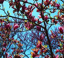 Magnolia Crescendo by MarianBendeth