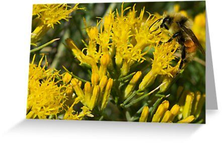 Teton Bee by Matthew Barrett