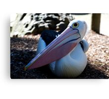 My Beak Can Hold More Than My Belly Can Canvas Print