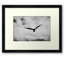 On the look out! Framed Print