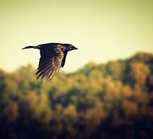 As the Crow Flies by Christopher Burton