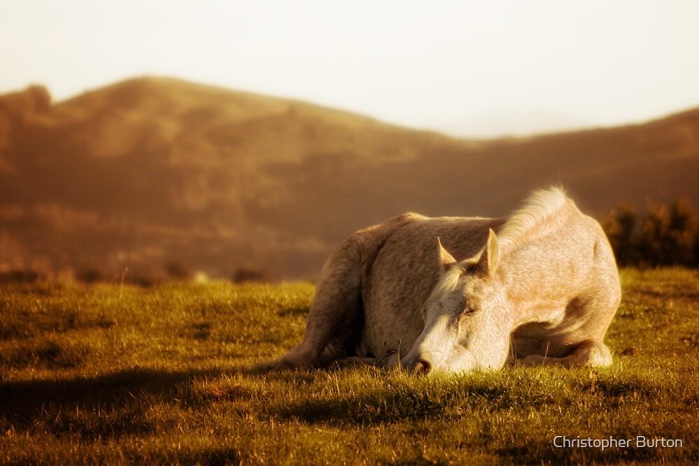 Splendor in the Grass by Christopher Burton