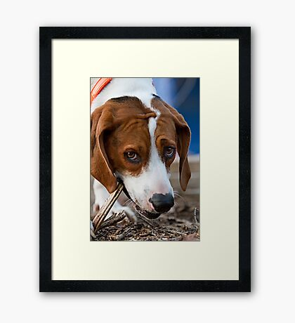 """Daisy Girl"" Framed Print"