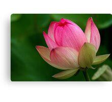 The Lotus Flower Canvas Print