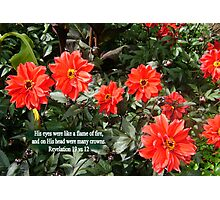 CROWNS OF FIRE  Red Dahlias with BIBLE TEXT/NO TEXT Photographic Print