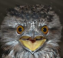 "Who ya callin' ""Frogmouth""?! by RebeccaHambyArt"