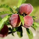 Peaches by Karen Martin