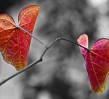 Leaves by Jessy Willemse